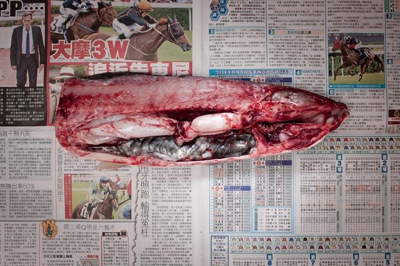 鯇魚。來自《貧窮線- 香港》系列